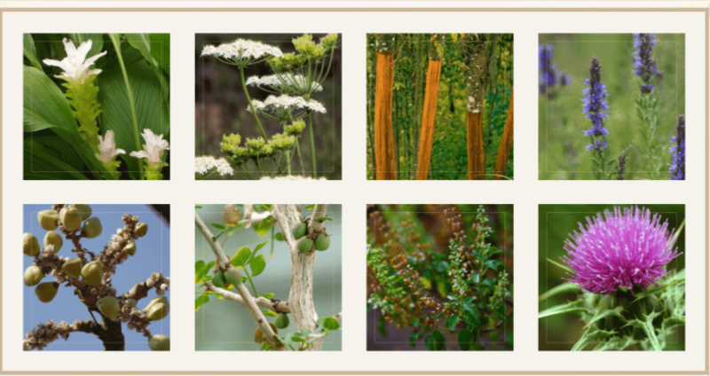 Wisdom Bible Based Herbal Supplement Ingredients
