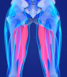 The Inner Thigh Solution eBook